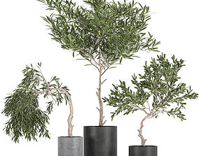 3D Decorative olive tree in a black flowerpots 734