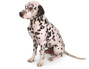 3D asset low-poly Dalmatian Dog Sitting