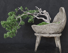 Decorative pine tree bonsai 3D model