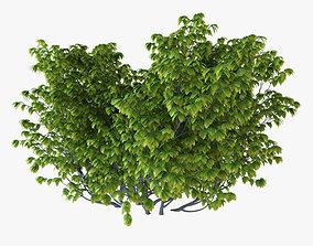 3D model Bush Plant