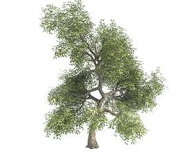 noruz tree 2 3D