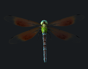 Dragonfly Anisoptera Low poly PBR 3D asset