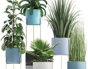3D Collection of ornamental plants