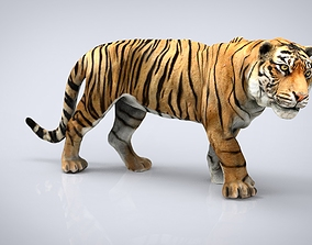 TIGER 3D model game-ready