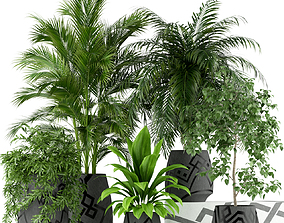 Plants collection 195 3D