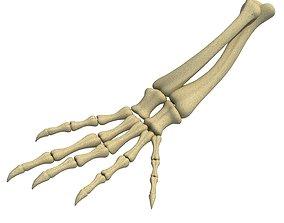 3D model Animal Hand Bones 3