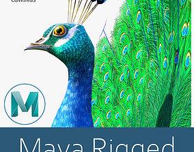 Peacock bird 3D model