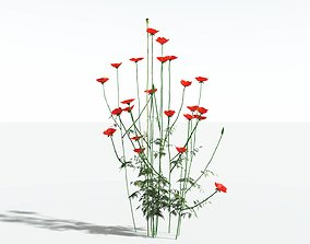 EVERYPlant Field Poppy SINGLE --1 Model--