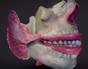 Teeth Pharynx Salivary glands 3D model