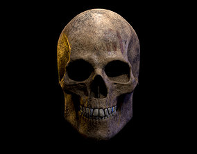 VR / AR ready medical Old Human Skull Low-poly 3D model
