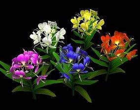 3D asset Hedychium coronarium Koenig Flower