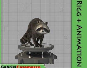 3D animated Raccoon
