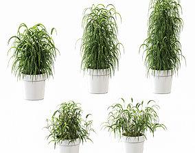 Plant in the pot - 5 models 3D