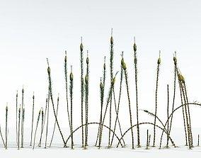 3D EVERYPlant Suckows Horsetail Tree EXT --24 Models--