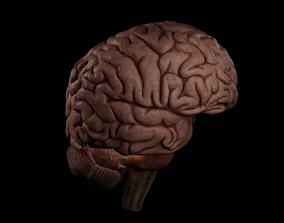 High Resolution 8k Brain System Pack 3D
