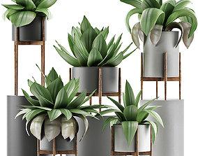 3D model Plants Collection 30