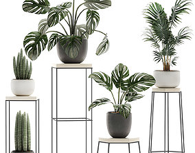 3D Decorative plants in pots on a stand for the interior