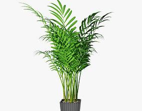 3D model palm 04