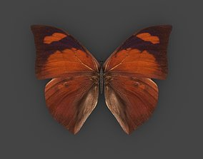 BFLY-006 Butterfly 3D