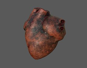 Human Heart 3D model game-ready