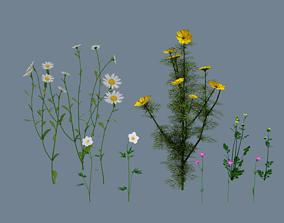 3D model Wild flowers set