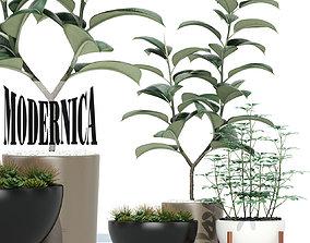 3D model Plants collection 73 Modernica pots