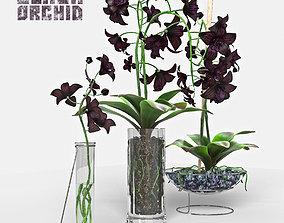 3D model Black Orchid set