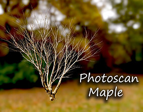 3D model Autumn Maple Scan