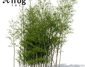 XrogPlants Golden Bamboo 3D model
