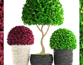 3D Topiary trees Buxus