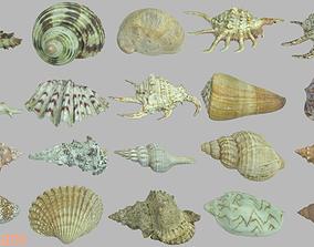 Seashell photoscans 20 pack 3D model