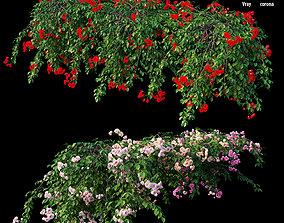 3D Rose plant set 31