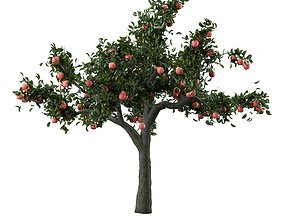 3D model HD Apple Tree