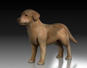 Golden Retriever tracking dog pet hunting dog house 3D