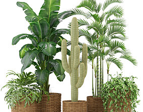 Plants collection 331 3D model