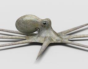 3D model Octopus Devilfish