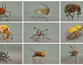 Insect Master Collection 3D model