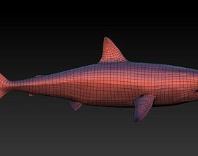 3D asset base shark