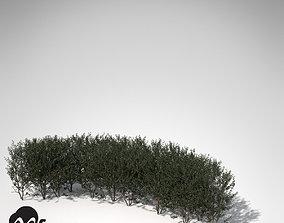 XfrogPlants Boxwood hedges 3D model