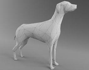 Dog 3D Model - Low Poly 2019 Nice Anatomy VR / AR ready 2