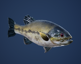 Large Mouth Bass Fish with Swimming Animation 3D model