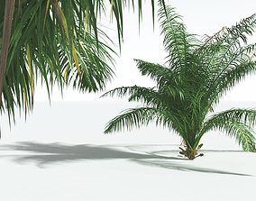 EVERYPlant Seashore Palm 07 --14 Models--