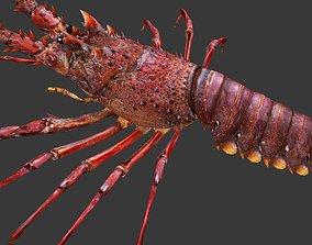 3D asset Australian lobster