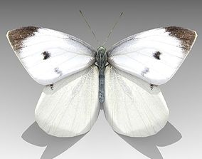 3D asset animated White butterfly