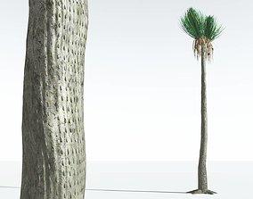 3D EVERYPlant Ovate Sigillaria 08 --18 Models--