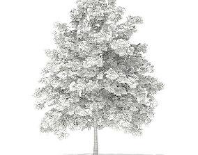 3D Pedunculate Oak Quercus Robur 7m
