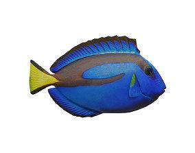 3D asset blue tang