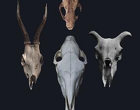Photogrametry Skull Pack 3D model animated