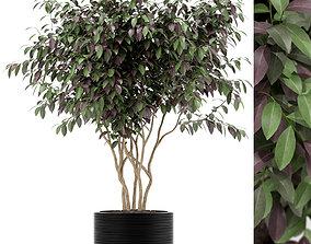 Plants collection 161 3D model