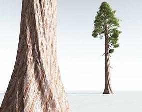 EVERYPlant Coastal Redwood 02 --12 Models--